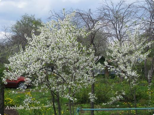 Вот и пришла долгожданная весна!Пришла с радостью,с нежностью, с чудесными запахами и разноцветьем! фото 7