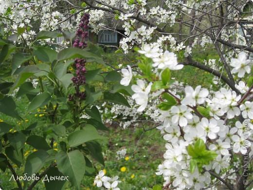 Вот и пришла долгожданная весна!Пришла с радостью,с нежностью, с чудесными запахами и разноцветьем! фото 8