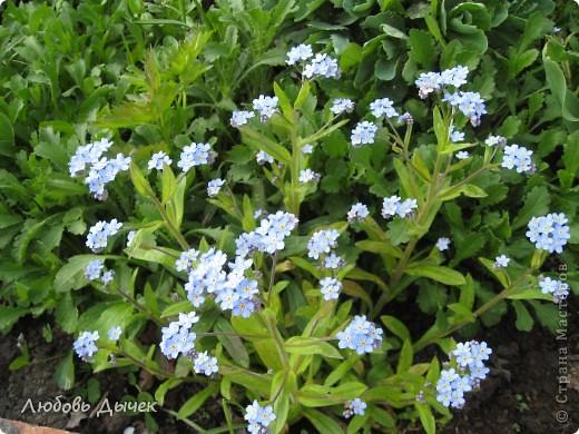 Вот и пришла долгожданная весна!Пришла с радостью,с нежностью, с чудесными запахами и разноцветьем! фото 10