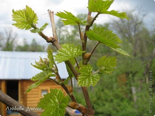 Вот и пришла долгожданная весна!Пришла с радостью,с нежностью, с чудесными запахами и разноцветьем! фото 9