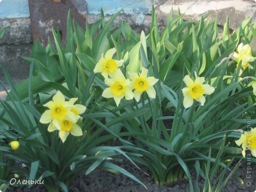 Какая красивая весна!!! Захотелось с вами поделиться. фото 2