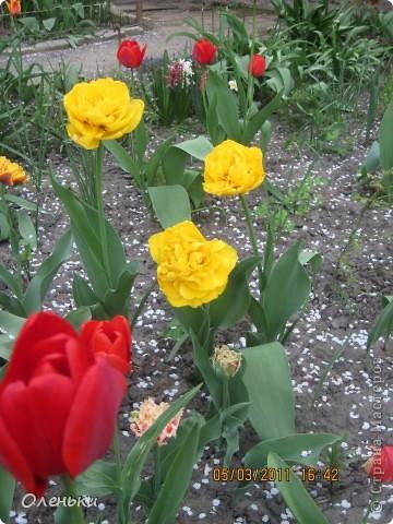 Какая красивая весна!!! Захотелось с вами поделиться. фото 4