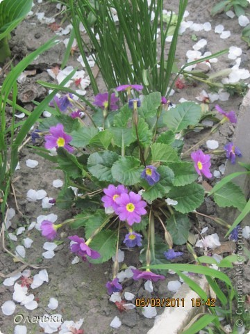 Какая красивая весна!!! Захотелось с вами поделиться. фото 5