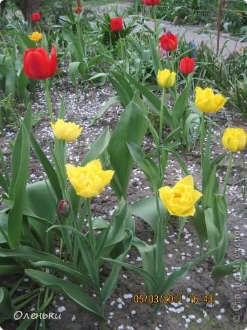 Какая красивая весна!!! Захотелось с вами поделиться. фото 7