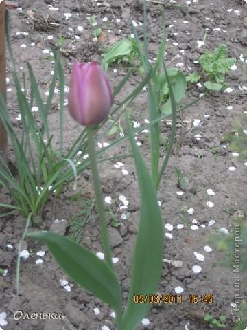 Какая красивая весна!!! Захотелось с вами поделиться. фото 9