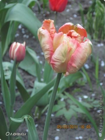 Какая красивая весна!!! Захотелось с вами поделиться. фото 11