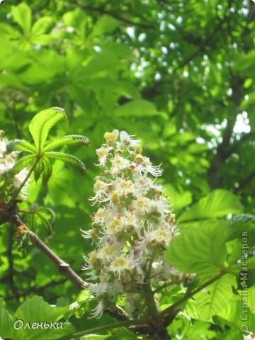 Какая красивая весна!!! Захотелось с вами поделиться. фото 17