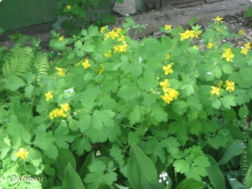 Какая красивая весна!!! Захотелось с вами поделиться. фото 19