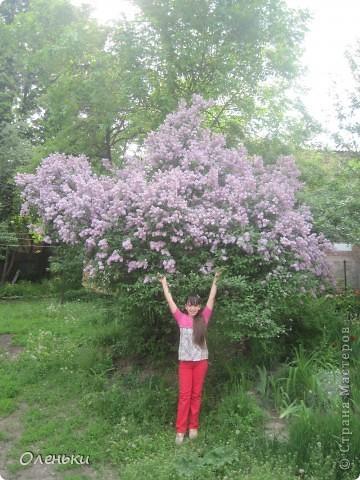 Какая красивая весна!!! Захотелось с вами поделиться. фото 20