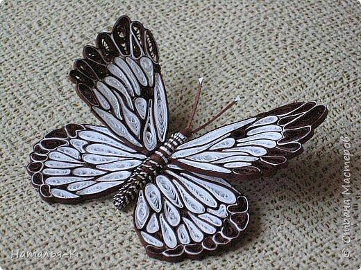 У меня появилась ещё одна бабочка.  Размер 7х8 см. Полоски 1,5 мм. фото 1
