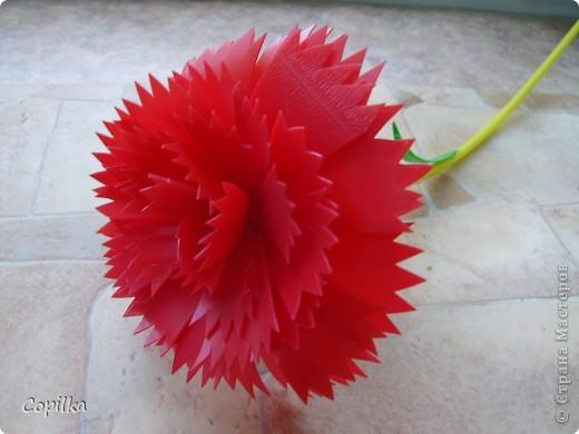 А у меня появился - вот такой цветочек! фото 2
