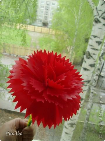 А у меня появился - вот такой цветочек! фото 3