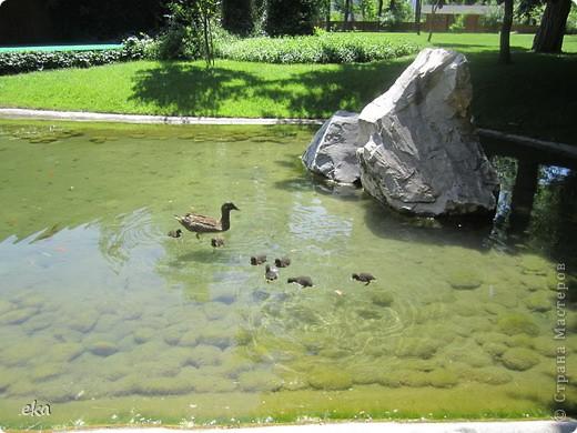В моём городе есть красивое место - японский сад. Меня сразу встретил там аист. фото 12