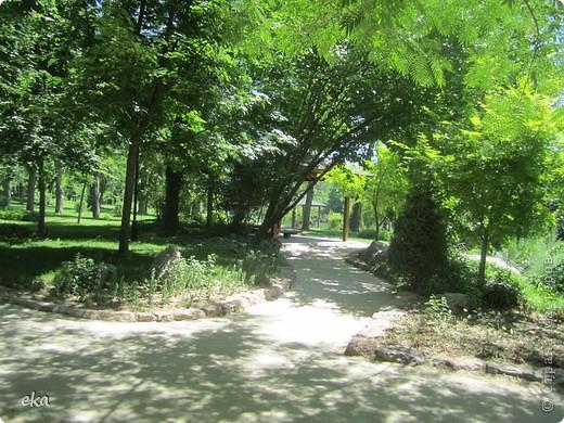 В моём городе есть красивое место - японский сад. Меня сразу встретил там аист. фото 14