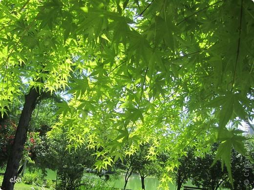 В моём городе есть красивое место - японский сад. Меня сразу встретил там аист. фото 15