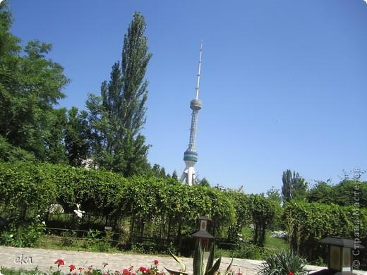 В моём городе есть красивое место - японский сад. Меня сразу встретил там аист. фото 22