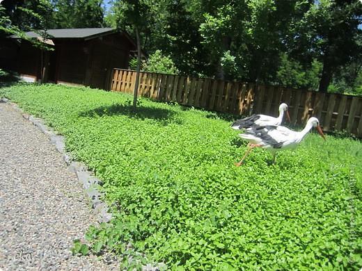 В моём городе есть красивое место - японский сад. Меня сразу встретил там аист. фото 3