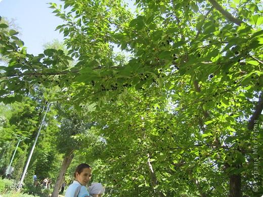 В моём городе есть красивое место - японский сад. Меня сразу встретил там аист. фото 4