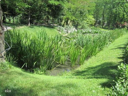 В моём городе есть красивое место - японский сад. Меня сразу встретил там аист. фото 6