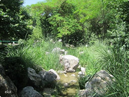 В моём городе есть красивое место - японский сад. Меня сразу встретил там аист. фото 9