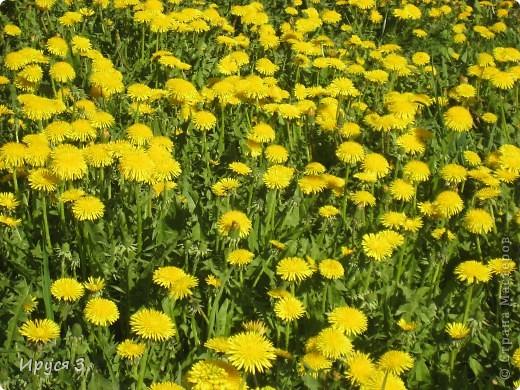 Весна фото 14