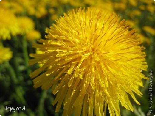 Весна фото 17