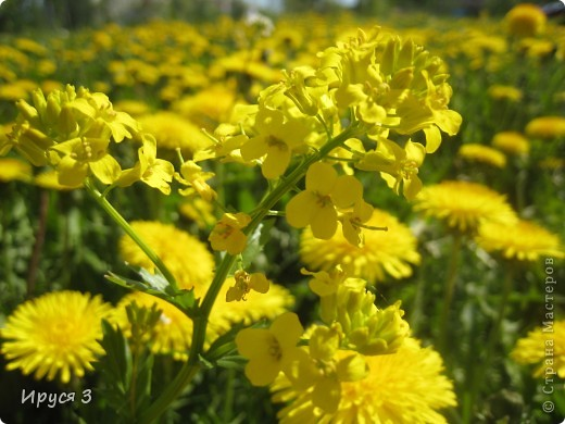 Весна фото 18