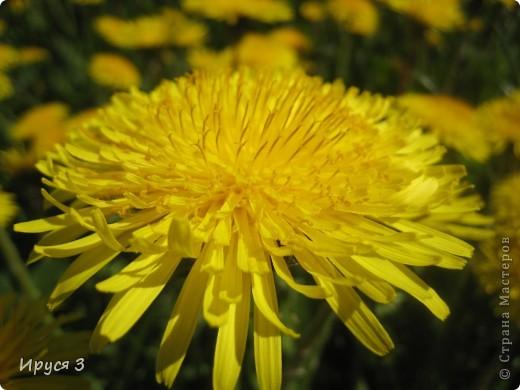 Весна фото 15