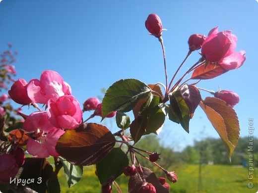 Весна фото 4