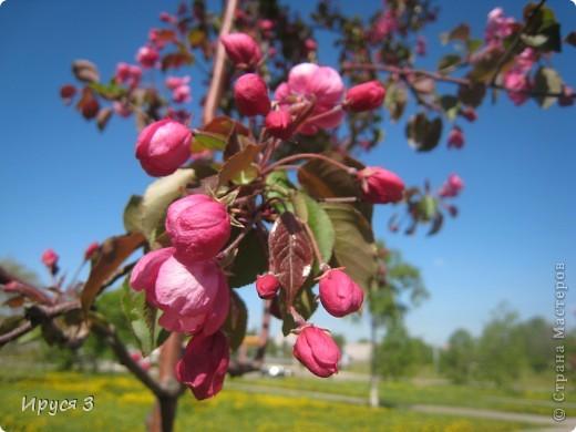 Весна фото 5