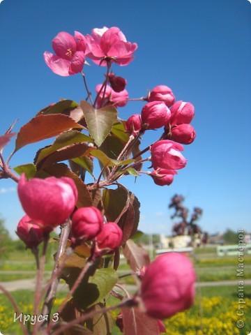 Весна фото 6