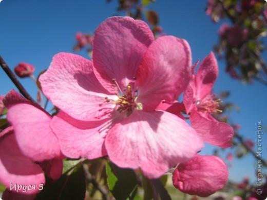 Весна фото 7
