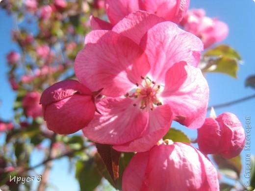 Весна фото 10