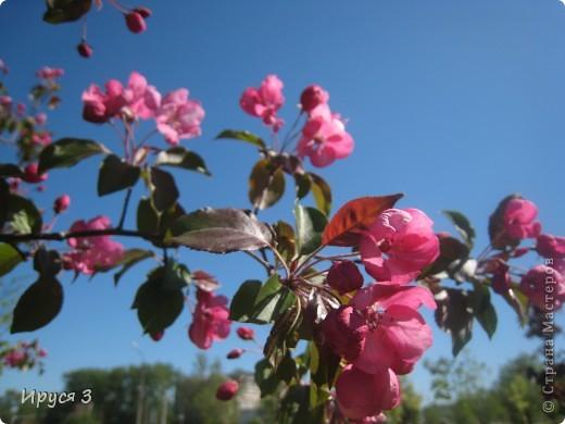 Весна фото 11