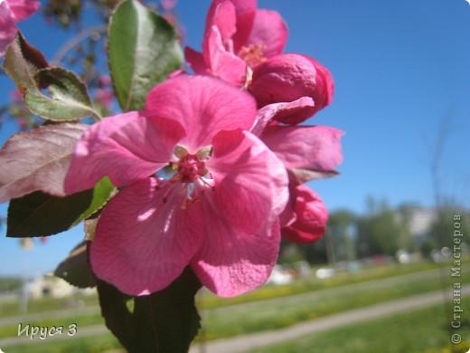 Весна фото 13