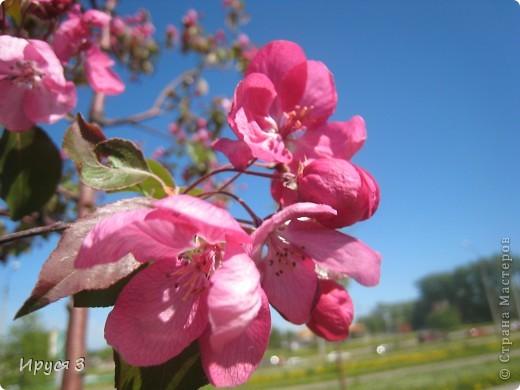 Весна фото 12
