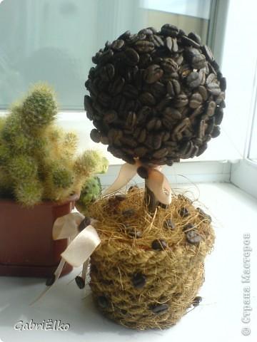 вот такое кофейное деревце фото 1