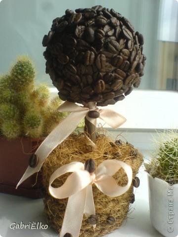 вот такое кофейное деревце фото 2