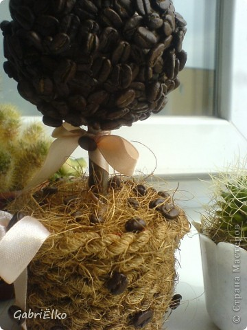 вот такое кофейное деревце фото 3