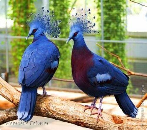Венценосный голубь в листве иланг-иланг. Размер без рамки 21*30см. Такую птицу вырезала первый раз. фото 13