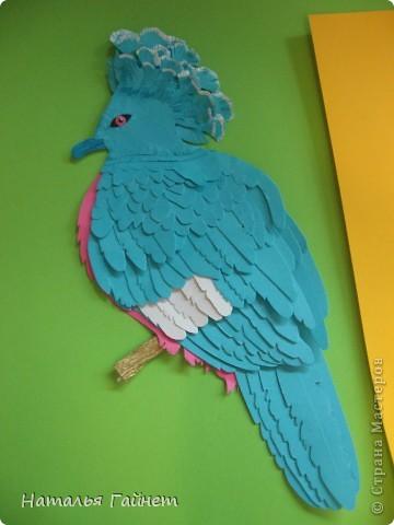 Венценосный голубь в листве иланг-иланг. Размер без рамки 21*30см. Такую птицу вырезала первый раз. фото 17
