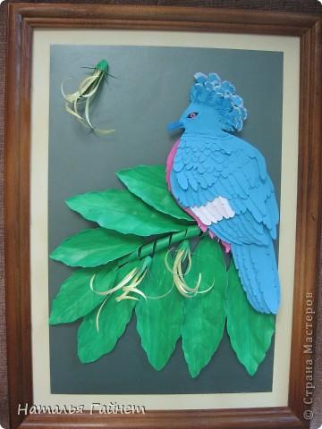 Венценосный голубь в листве иланг-иланг. Размер без рамки 21*30см. Такую птицу вырезала первый раз. фото 2