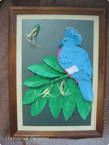 Венценосный голубь в листве иланг-иланг. Размер без рамки 21*30см. Такую птицу вырезала первый раз. фото 19