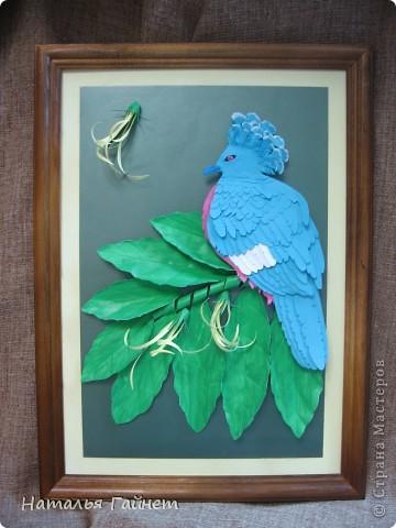 Венценосный голубь в листве иланг-иланг. Размер без рамки 21*30см. Такую птицу вырезала первый раз. фото 3