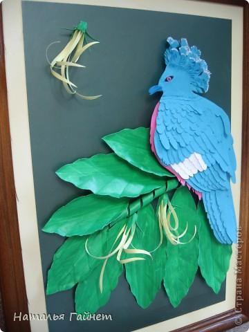 Венценосный голубь в листве иланг-иланг. Размер без рамки 21*30см. Такую птицу вырезала первый раз. фото 4