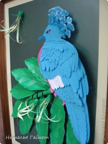 Венценосный голубь в листве иланг-иланг. Размер без рамки 21*30см. Такую птицу вырезала первый раз. фото 5