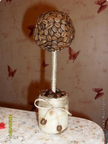 Вот и я вырастила кофейное деревце счастья!!! Мне очень нравится результат. В планах - рост кофейной рощи.