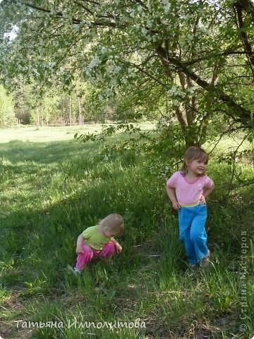Яблони в цвету. фото 5