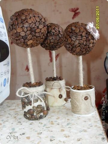Вот и я вырастила кофейное деревце счастья!!! Мне очень нравится результат. В планах - рост кофейной рощи. фото 2