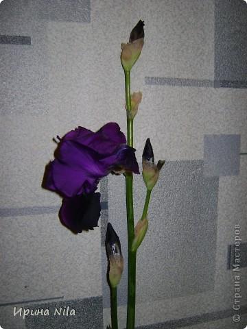 Продолжение начатой темы (http://stranamasterov.ru/node/199539?t=blog) А это фото ирисов, растущих на городских клумбах и во дворах, а также у нас на даче. Названий сортов не знаю, просто фотографирую, нравятся мне они!..  фото 13